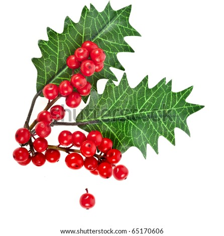 red berries holly with leaves isolated on white - stock photo