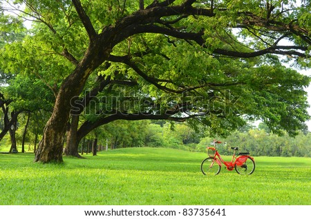 Red bicycle on green grass under Big tree - stock photo