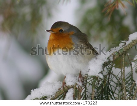 Red Bird - stock photo