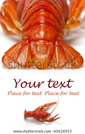 Red boiled crayfish on a white background