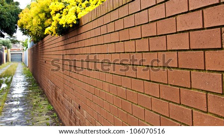 Red brick garden fence with yellow flower and empty street - stock photo