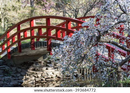 red bridge over water in japanese garden - Japanese Garden Cherry Blossom Bridge