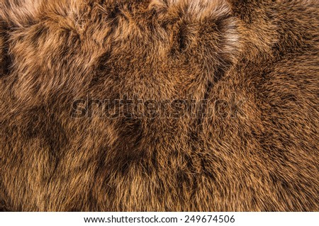 Red Brown Grey Wolf Fox Fur Natural, Animal Wildlife Concept and Style for Background, textures and wallpaper. / Close up Full Frame. - stock photo