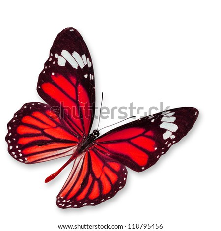 Red butterfly , isolated on white background - stock photo
