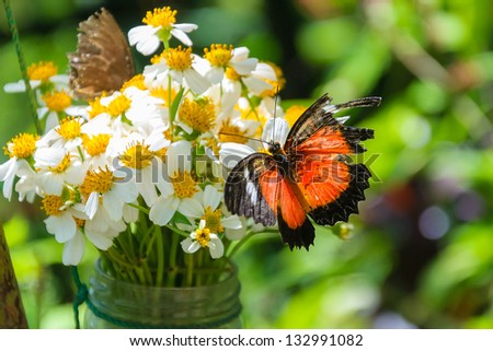 Red butterfly sitting of the white flowers - stock photo