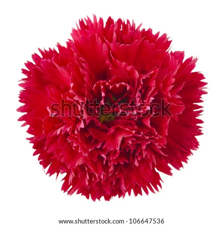 Red carnation flower head isolated on white - stock photo