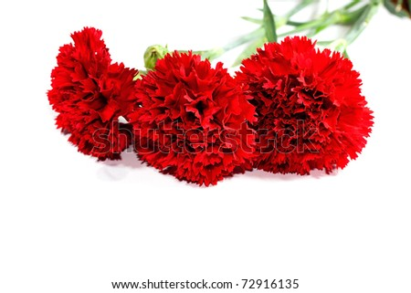 Red carnation flower on a white background - stock photo