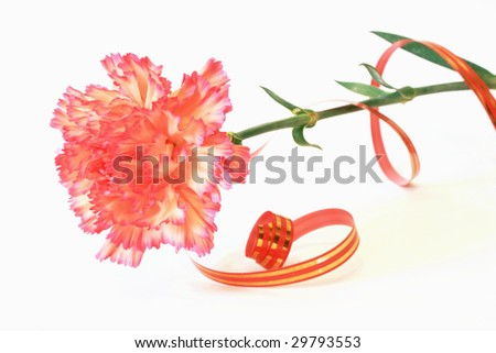 Red carnation on white background with red&gold ribbon