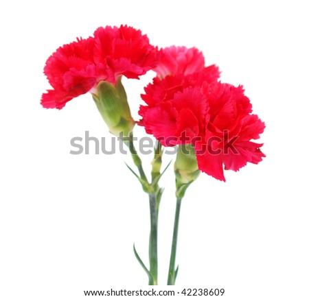 Red carnations for 'love'