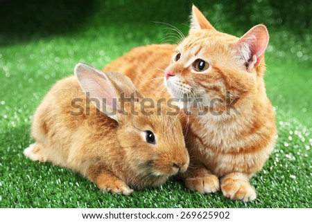 Red cat and rabbit on green grass background - stock photo