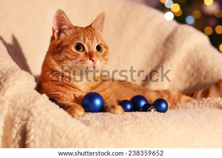 Red cat at home in Christmas time - stock photo
