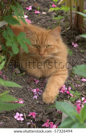 Red cat in a garden - stock photo