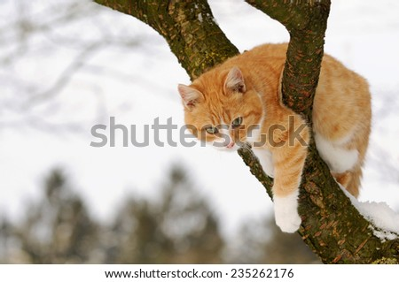 Red cat in the tree - stock photo