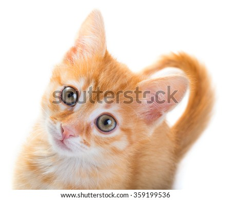 Red cat looking up isolated on white background - stock photo