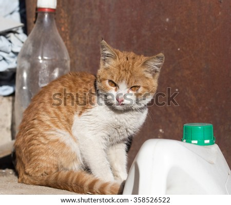 red cat near the bottle - stock photo