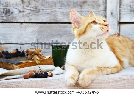 red cat on a wooden table