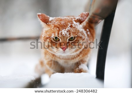 Red cat on bench in park on snowfall background - stock photo