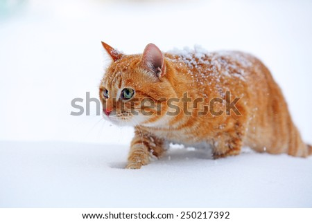 Red cat on snow background - stock photo