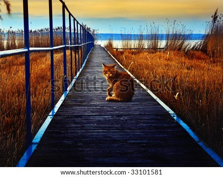 Red cat on the pier - colorized image - stock photo