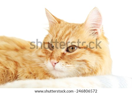 Red cat on warm plaid and light background - stock photo