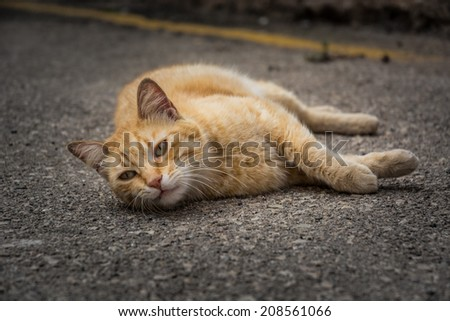 Red cat relaxing on the middle of a street - stock photo