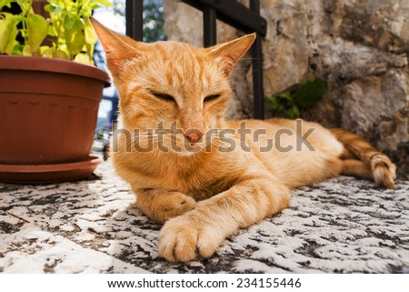 red cat resting on the street - stock photo