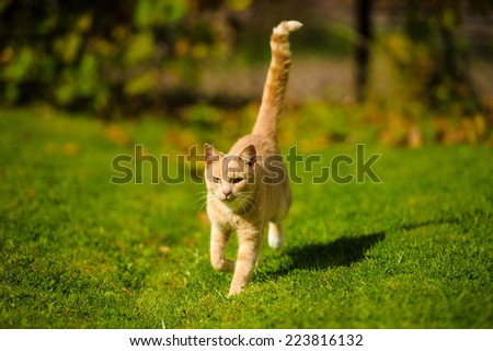 Red cat running on green grass - stock photo