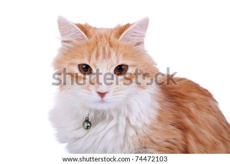 Red cat's face on a white background