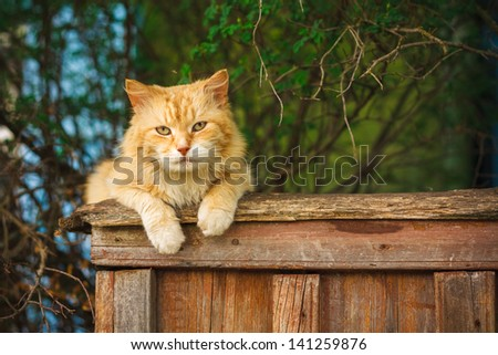 Red Cat Sitting On A Fence and looking at camera - stock photo