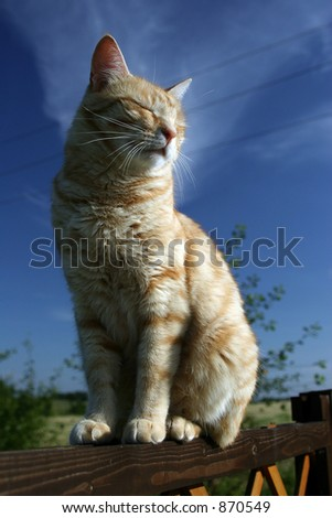 Red cat sitting on fence - stock photo
