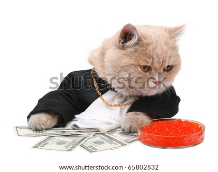 Red cat sitting on the dollar on the white background, Christmas, New Year