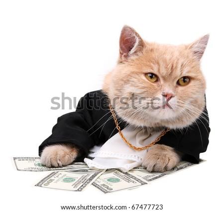 cat service plan