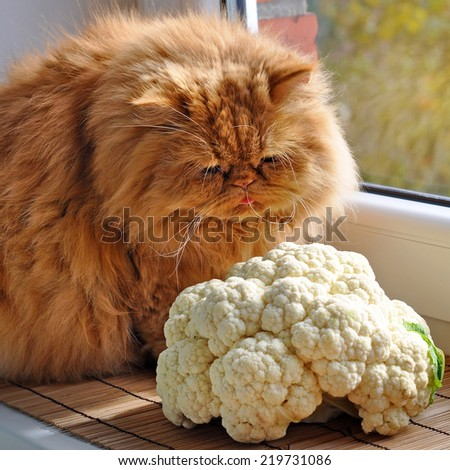 Red cat sitting on the windowsill near the cauliflower orchard and looks out the window.  - stock photo