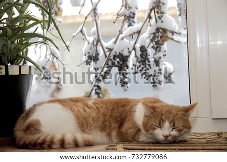 Cat window winter stock images royalty free images for Sleeping with window open in winter