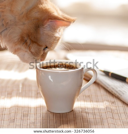 red cat sniffing a Cup of black coffee in the morning in the kitchen