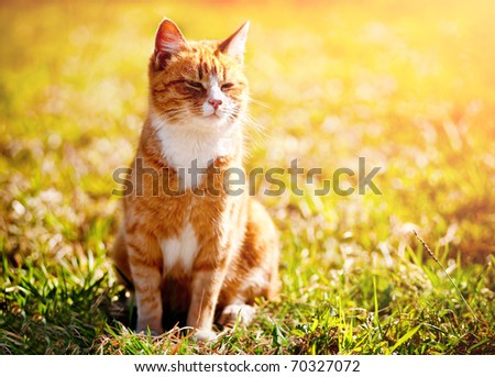 Red cat squinting in the bright sun - stock photo