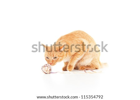 red cat with a ball of yarn