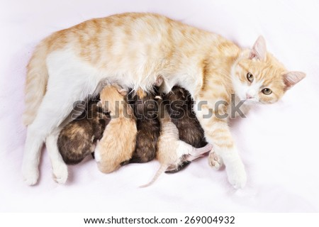 red cat with newborn kittens