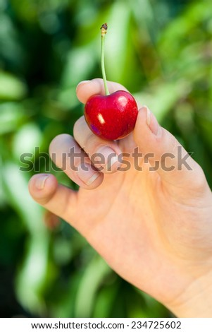 Red cherry in woman's hand outdoor sweet fruit - stock photo