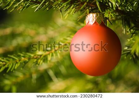 Red christmas ball on the christmas tree.  - stock photo