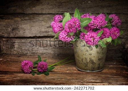 Red clover meadow  on a light background