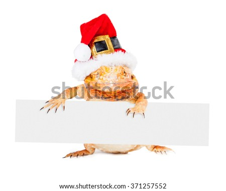 Red color bearded dragon standing up wearing a Christmas Santa Claus hat holding a vertical blank sign - stock photo