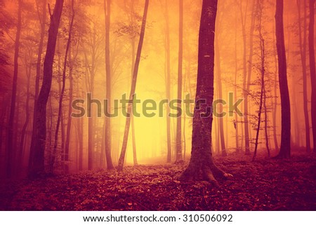 Red colored oversaturated foogy forest tree background. Oversaturated mystical yellow red foggy light in magic woodland. Color filter effect used. - stock photo