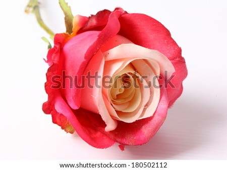 red colorful textile rose closeup - stock photo