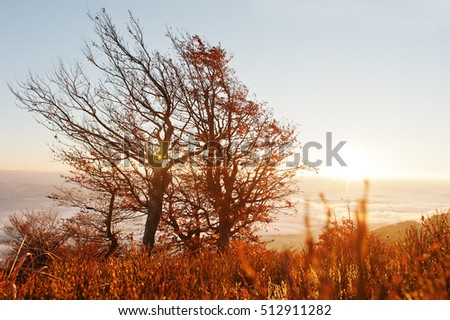 Red colourful autumn trees on sun shine light on morning of amazing Carpathian mountains.