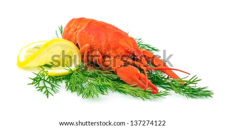 Red cooked lobster with lemon on dill isolated on white background - stock photo