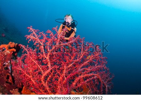 Red corals with a female diver in the background, on a reef at Bali, Indonesia - stock photo