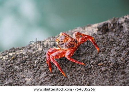 red crab on a rock