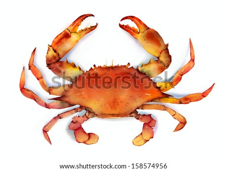 Red crab on white background - stock photo