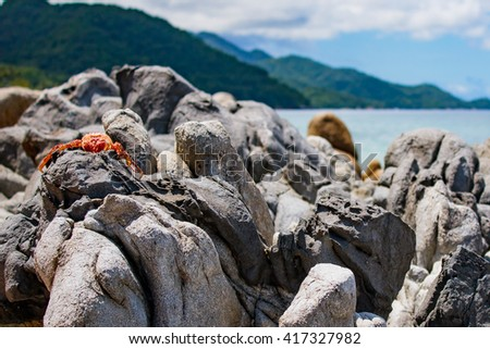 Red Crab Shell on Beach Rocks 3 - stock photo